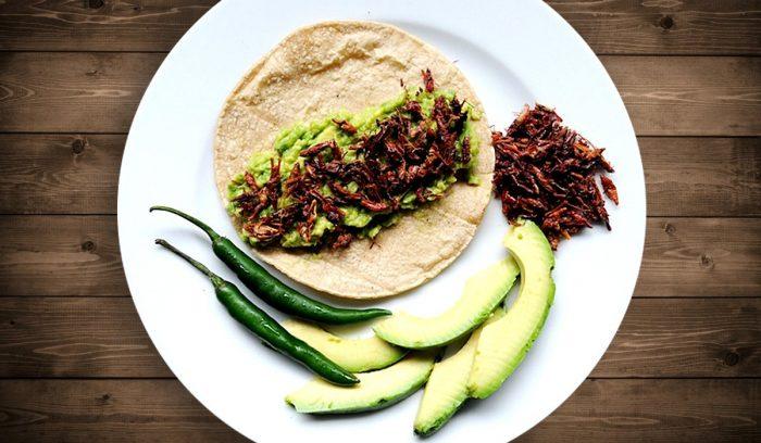 Alimentos e insectos enriquecidos con grasas saludables serán parte de la dieta del mañana