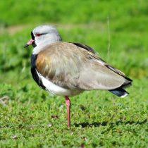 Investigadoras chilenas crean aplicación para identificar a más de 200 aves del país