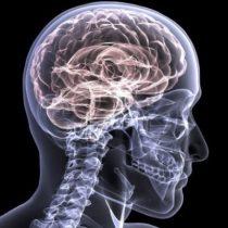 Estudio del MIT revela que el cerebro recurre a experiencias pasadas para sobreponerse a lo desconocido
