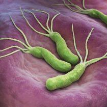 Gastroenterólogos advierten que un 70% de la población chilena porta la bacteria Helicobacter Pylori