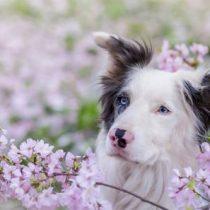 Fortalecer el sistema inmunitario de las mascotas en primavera también es importante