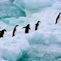 A un año de la marcha más triste de los pingüinos