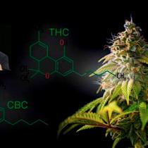 Influyente neurólogo estadounidense lidera IV Simposio Internacional de Cannabis Medicinal en Chile