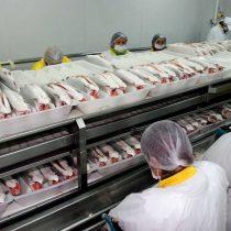 Empresa salmonera anunció el despido de cerca de 200 trabajadores en Talcahuano por escasez del animal