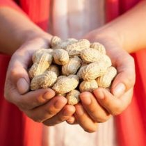 Los asombrosos resultados de un estudio que muestra cómo los alérgicos al maní pueden llegar a tolerarlo
