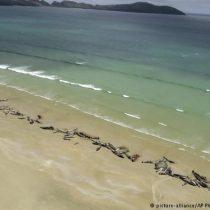 Unas 145 ballenas mueren en playa remota en Nueva Zelanda