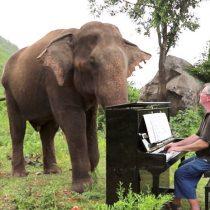 Pianista toca música a elefantes ciegos en un santuario en Tailandia