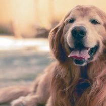 Insólito: un perro