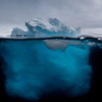 Fracasa idea de crear mayor santuario marino del mundo en la Antártica