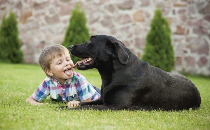 Garrapatas y pulgas pueden producir fiebre en seres humanos y cojeras en mascotas