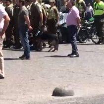 Denuncian que Carabineros no se preocupa del cuidado de sus perros durante las olas de calor en Santiago