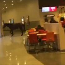El caballo que entró a Happyland en un mall de Coronel