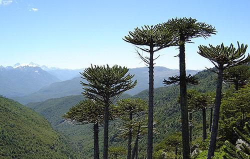 Malas noticias para el medio ambiente: presupuesto 2019 para áreas protegidas disminuye en 13%