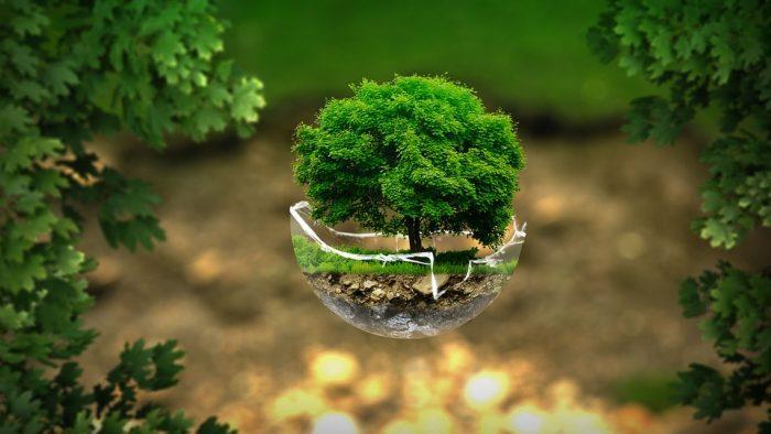 El 60% de la población considera que el Estado es el principal responsable del medio ambiente