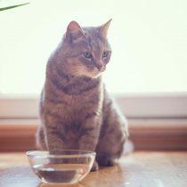 ¿Cómo conseguir la hidratación necesaria para que los gatos no sufran las altas temperaturas?