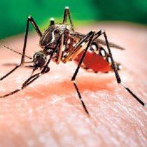 Google tiene un plan para eliminar mosquitos en todo el mundo