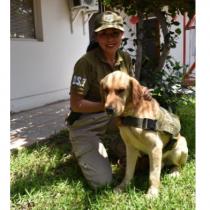 Perro antidrogas de Carabineros vuelve a casa tras 7 días extraviado