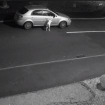 El brutal caso de abandono animal que conmueve al mundo: hombre abandona a su perro pero éste insiste en volver a subirse al auto
