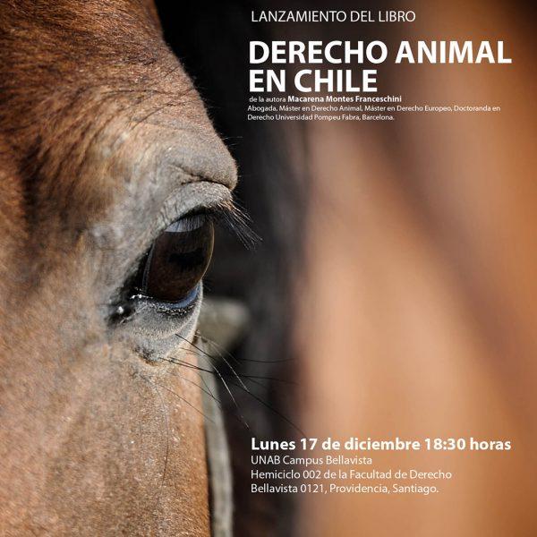 """Experta en derecho animal: """"Si bien la Ley de Tenencia Responsable ha recibido muchas críticas, por lo menos existe"""""""
