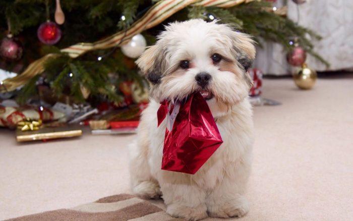 ¿Regalar una mascota para Navidad?
