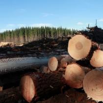 La Araucanía sin forestales, ahora