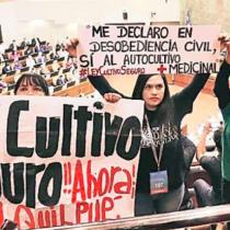 Proyecto de Ley Cultivo Seguro: de droga dura a receta médica