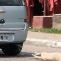 Brutal caso de maltrato animal en Argentina: hombre ata a su perro al auto y lo arrastra por la calle