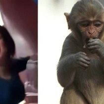 """Condenan a tres años de cárcel a mujer que """"acosó sexualmente"""" a un mono en Egipto"""