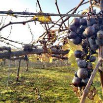 Japón apuesta por los vinos autóctonos como complemento de su cocina