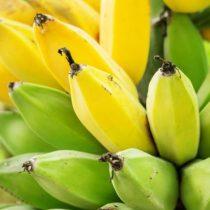 Cómo Holanda logró su primera cosecha de banano sin usar tierra