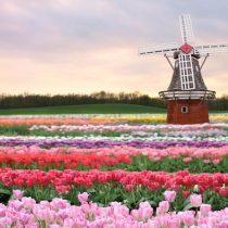 Los Países Bajos revolucionan la agricultura