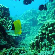 Rapa Nui es uno de los mejores destinos para bucear en Latinoamérica