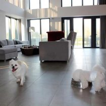 La vida de las mascotas en China: suites de lujo y viajes en Ferrari