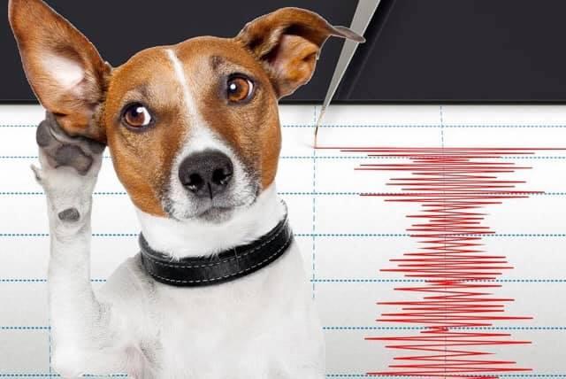 Llaman a cuidar a los animales ante futuras réplicas y temblores