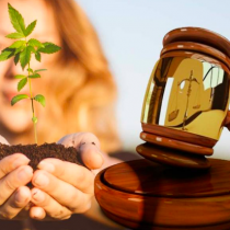 Ley Cultivo Seguro. Para un debate informado sobre cannabis medicinal