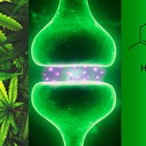 Cannabinoides, el paso natural de la medicina personalizada