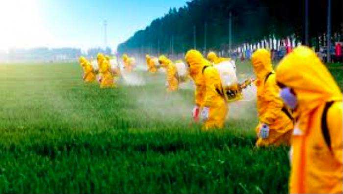 La muerte silenciosa: uso en Chile de plaguicidas prohibidos en el mundo causa daño cognitivo en menores