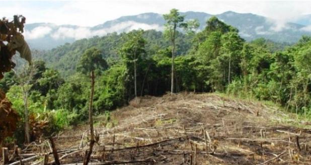 Acusan a hijo de José Luis del Río de tala indiscriminada de bosque nativo para plantar paltos