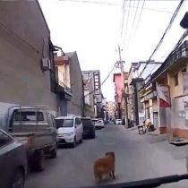 No la abandona: perro guía a una ambulancia hacia el lugar donde su dueño se había desmayado