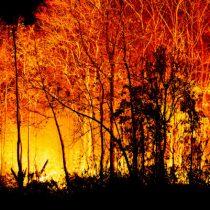 Peligro de incendios: ¿cuáles son los seguros a los que pueden acceder agricultores?