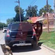 Una imagen que duele: perro persiguió por más de 15 cuadras a familia que lo había abandonado