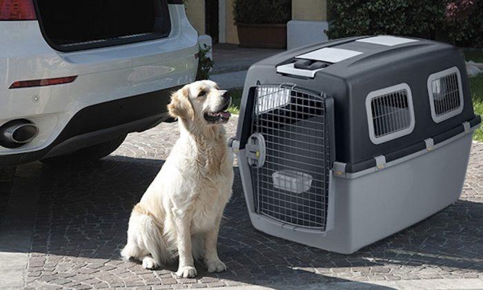 Prepare el equipaje de su mascota si viaja con ella