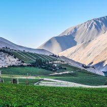 Buscan paliar efectos del cambio climático en la producción del pisco chileno