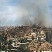 Incendio forestal afecta al sector de Limonares en Viña del Mar