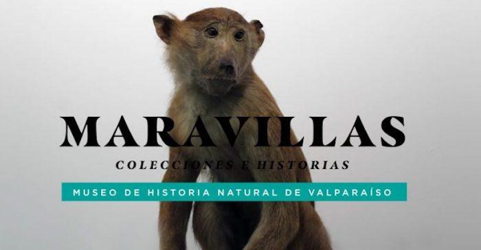 """Muestra """"Maravillas"""" en Centro Cultural La Moneda"""