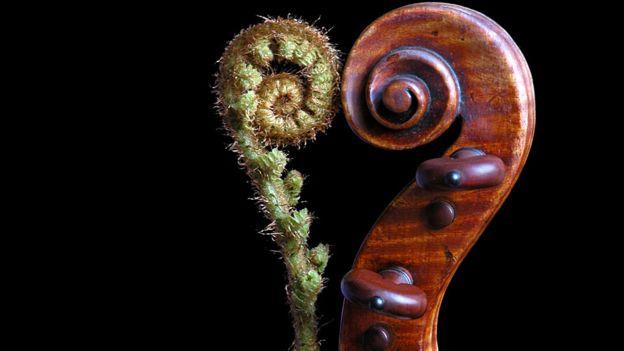 Fibonacci, el matemático que se puso a contar conejos y descubrió la secuencia divina
