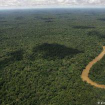 La urgencia de tomar medidas para evitar la deforestación de América Latina
