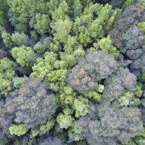 La sucesión ecológica y el valor de los matorrales y renovales