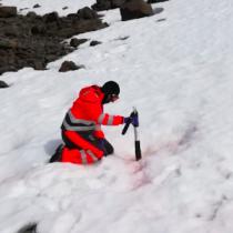 Investigadores chilenos se concentran en las algas antárticas como