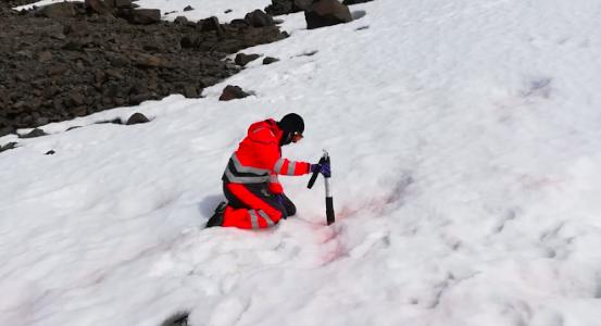 """Investigadores chilenos se concentran en las algas antárticas como """"los verdaderos sensores"""" del Cambio Climático"""